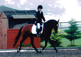 PhysioNeeds Equestrian